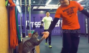Friendly cat gives high fives to gym-goers