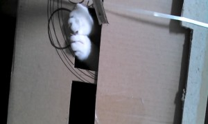 Silly Cat has a Funny Hiding Place!