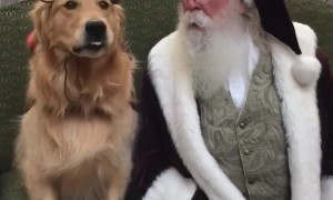 Reindog Sitting with Santa