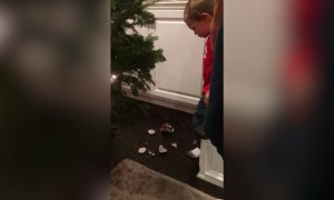 When Decorating for Christmas Goes Wrong