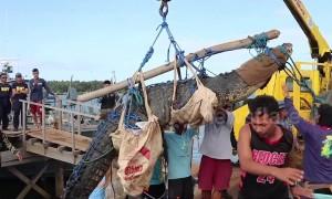 Coastguards trap 15ft man-eater croc using ingenious fishing trap