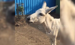 Singing donkey from India becomes internet sensation