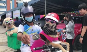 Lizard and two dogs wearing sunglasses pose for photos while on motorbike