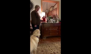 Dog barks at toy Santa after being told he's 'not a good boy'