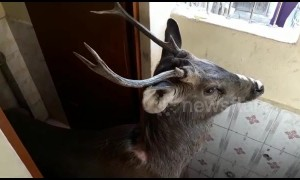 Oh deer! Unexpected guest breaks into school in northern India
