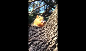 Squirrel Buddy Loves Snacks