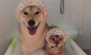 Cat and dog buddies take a bubble bath together