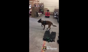 South Dakota police dog not a fan of new snow boots