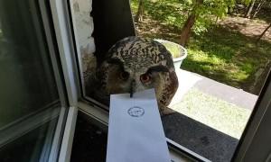 Messenger Owl with Attitude