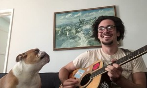 Bulldog sings along with guitar playing own