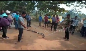Outcry against amateur snake catchers turning cobra rescue into photo-op