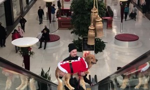 Santa Paws Goes Up Up and Away