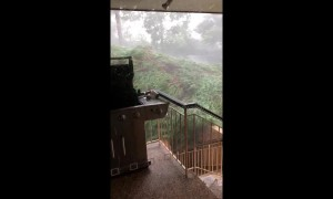 Near miss for family when storm fells huge tree in Sydney, Australia