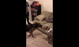 Dog terrified of cat cushion
