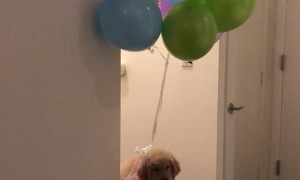 Puppy Balloon Illusion