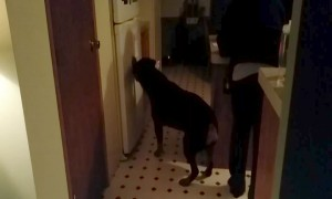 Dog Tries to Break into Fridge