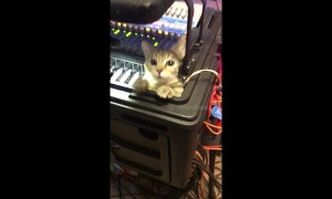 Kitty sound engineer checks the cables