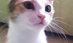 Cats Got a Tongue