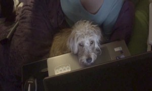 Guilty Dog Won't Look at his Owners – LOL!