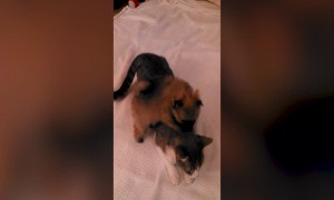 Kitten and Puppy Together means Ultimate CUTENESS!