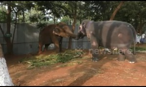Two elephant friends have heartwarming reunion after a year apart
