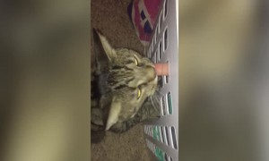 Cat has Some Fun with Laundry Basket