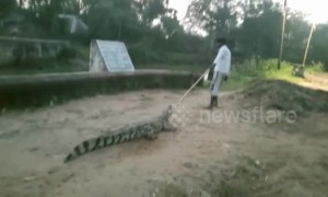 Indian villagers find stray crocodile in their house so they dump it in a canal