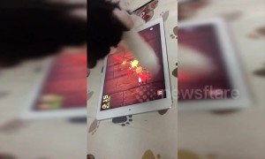 Clever cat is obsessed with playing mobile game on tablet
