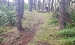 Man wipes out on pine tree mountain-biking in Scottish forest