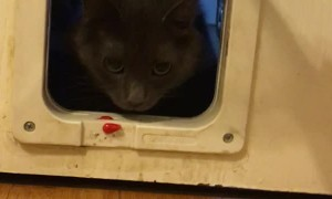 Kitty Scared of Pet Door