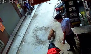 Rescuing a Dog from the Sewer
