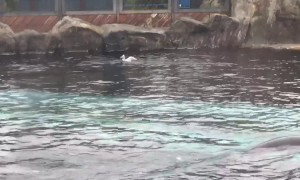 UK family witness sea lion hunting seagull at Colchester zoo