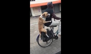 Dog clings on to owner's waist as he rides bike