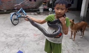 Fearless boy catches 2-metre-long snake only with his BARE hands