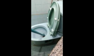 King cobra caught in family's toilet