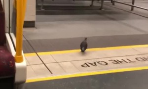 Smart Bird Takes the Train