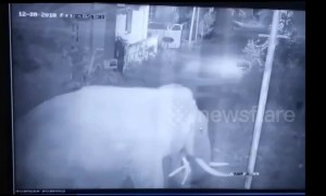 Security, we have a big problem! Herd of seven elephants enters residential compound