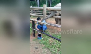 Too cute! Playful baby elephant prods mahout with his trunk