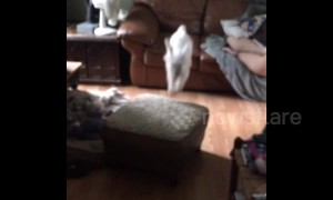 The floor is lava! Watch how this adorable puppy gets across the room