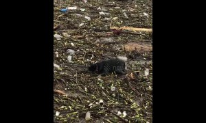 Dog almost drowns in Alabama river full of trash