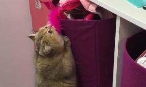 Cat is a Cute Little Climber