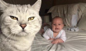 This baby gets super excited around the household's cats