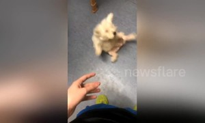 Dog hilariously falls backwards in failed attempt to catch treat