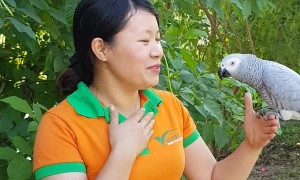 Sweet Parrot Expresses Love for Trainer