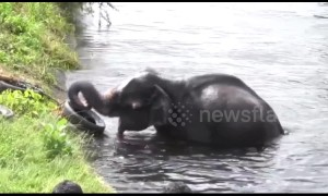 Locals use makeshift rope ladder to save elephant trapped in canal