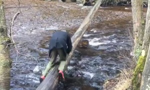 Slippery Tree Bridge Fail