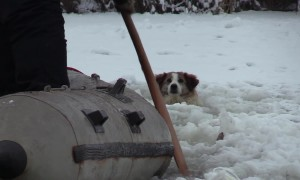 Locals pluck lost dog from icy river in perilous 4hr rescue mission