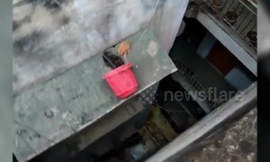 Kitten stuck on ledge of building rescued using bucket in India