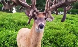 Massive 107 Point Buck