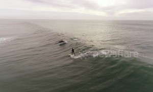 Magical moment dolphins jump alongside surfer off LA coast